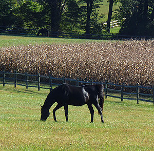 Highland Township Pennsylvania pasture
